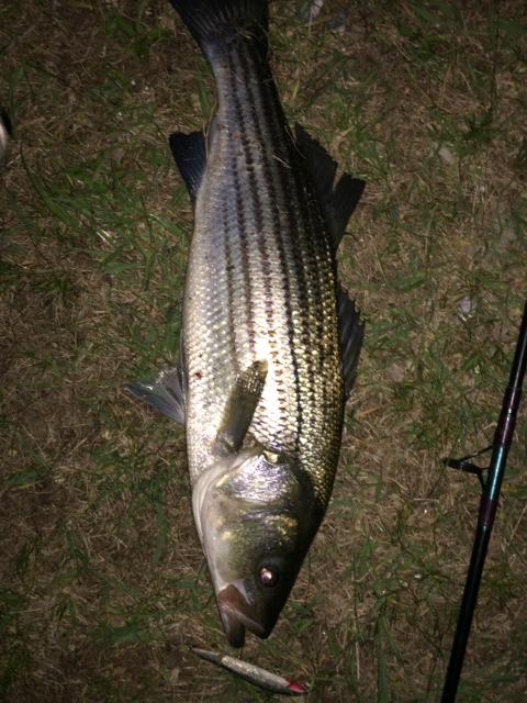 SPRING FISH PIC